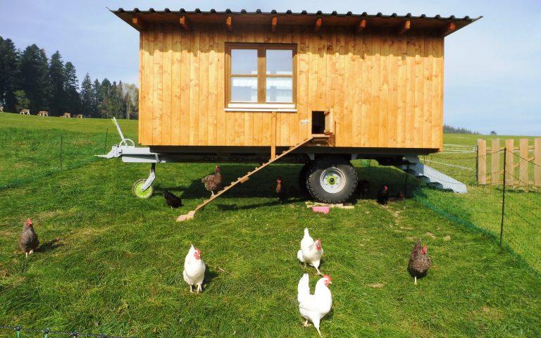 Neuer Hühnerwagen