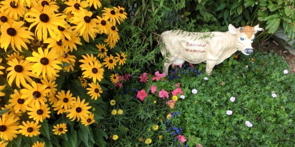 1. Bauernhof Wiedemann - Kuh