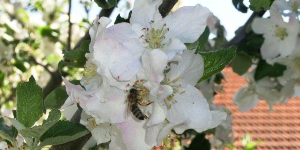 3. Fleißiges Bienchen
